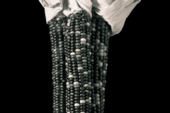 Decorative-Corn-copy